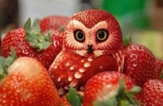 Owl Made Out Of Strawberries