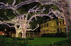 Lighted Trees In New Orleans