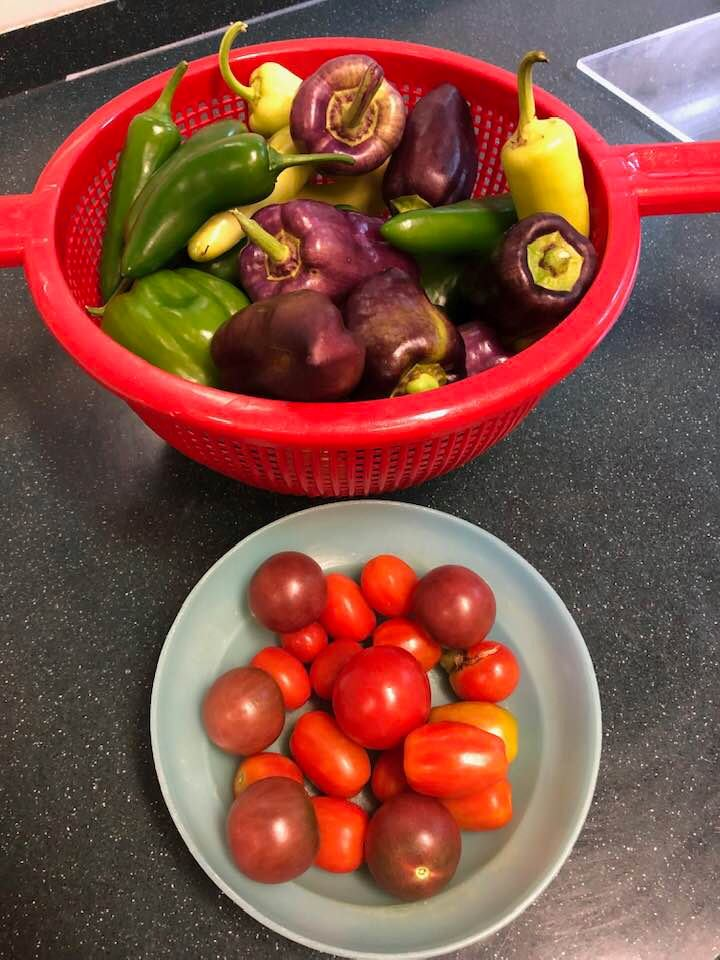 My Garden Starting To Produce! Yummy Time !